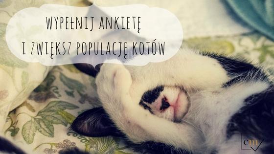 wypełnij ankietę i zwiększ populację kotów